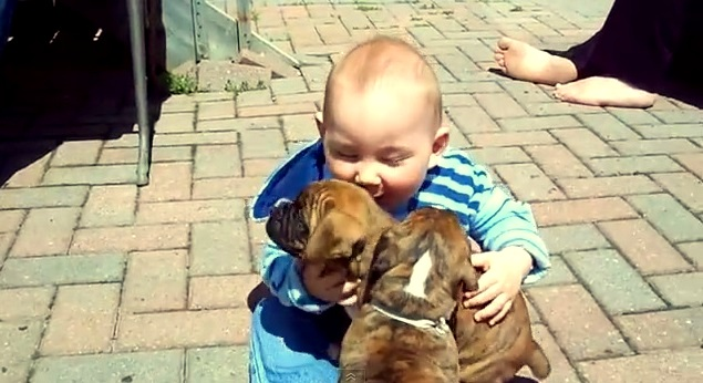 Baby Meets Boxer Puppies