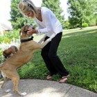 Tennessee Family Gets Big Surprise from 'Hospice' Dog They're Fostering