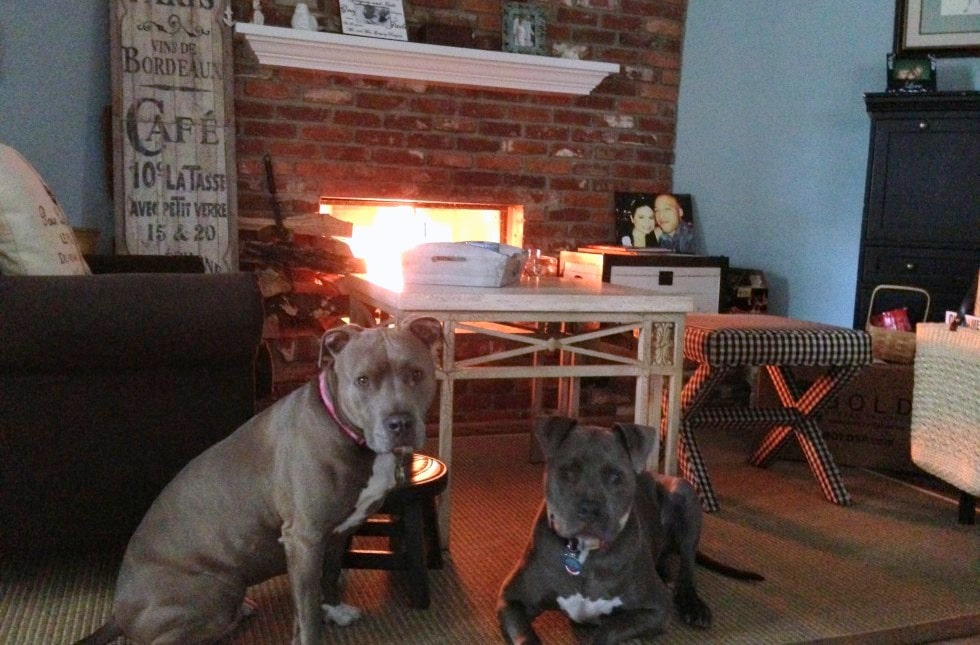 Landlord Will ONLY Rent to People with Big Dogs, Especially 'Bully-Breeds'