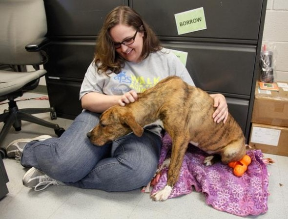 6.9.14 - Unique Foster Program Helping Shelter Dogs to Thrive2