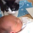 Dogs and Cats Meeting Babies For The First Time Compilation
