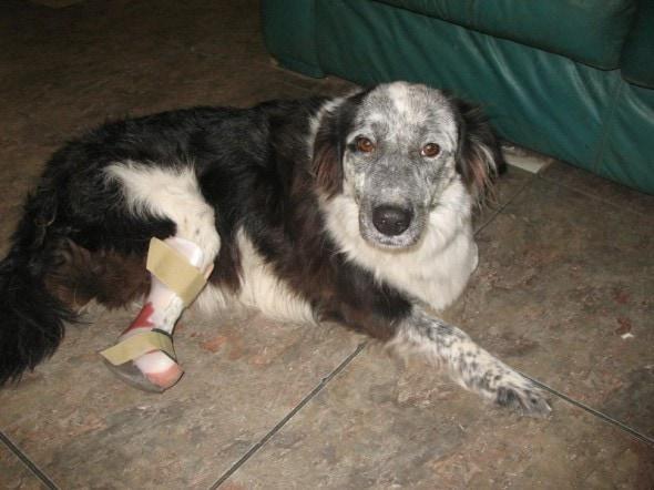 Jessie with prosthetic