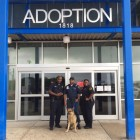 I-35 German Shepherd Gets Rescued and Adopted