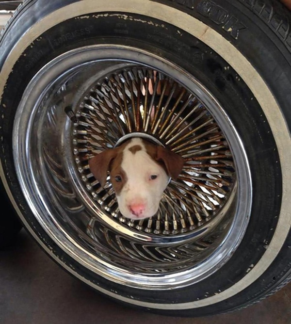 Firefighters Safely Extricate Puppy Stuck in Tire Rim