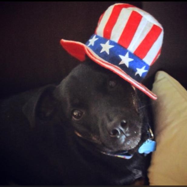 Happy 4th of July from the Dog!