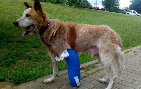 Animal Lovers and Social Media Save a Dog's Life