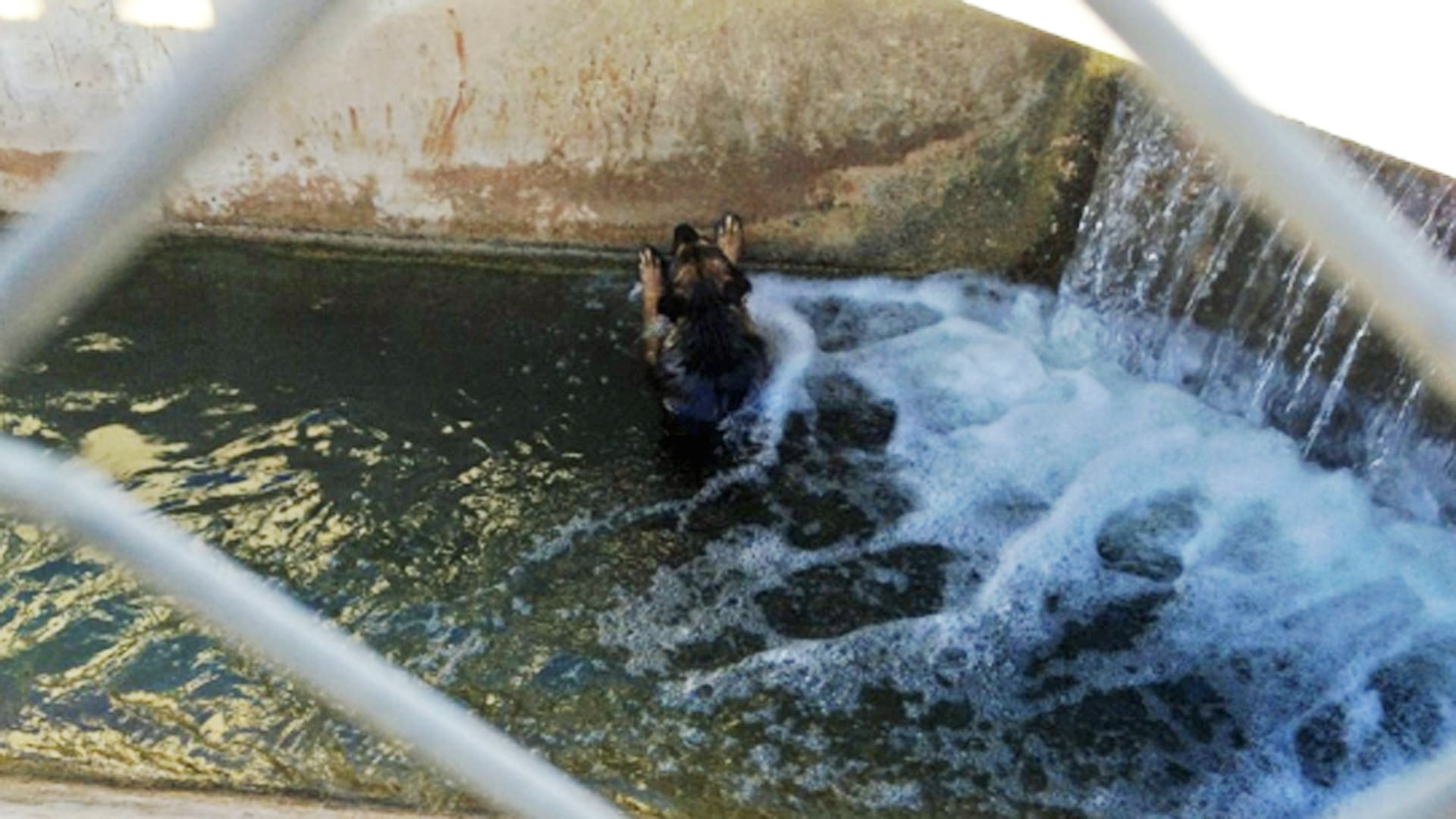 Dog Falls in Water Canal, Clings to Life Until Rescued