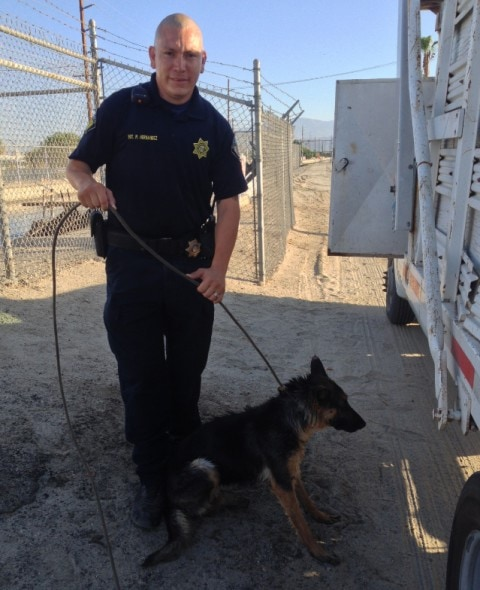 Lola and Sgt. Hernandez. Photo Credit: Riverside County Animal Services