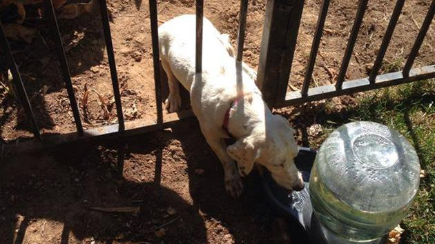 Dog Stuck in Fence for over Ten Hours Gets Rescued