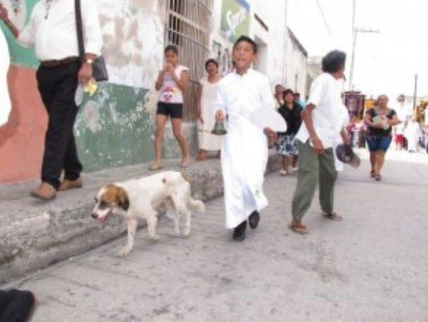Catholic Dog Participates in Religious Festival