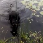 Dog Saves Drowning Bird