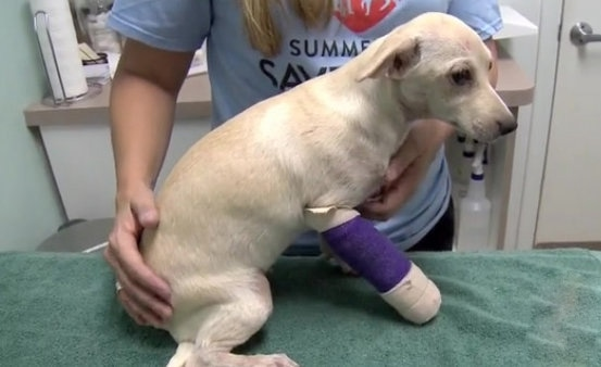 Homeless Women save Dog Thrown from Speeding Car