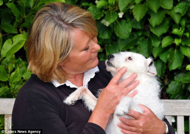 Snowy Returns Home Four Years after Being Stolen