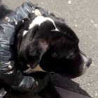 Dog Owner Forces Pet to Wear Collar Made of Bricks