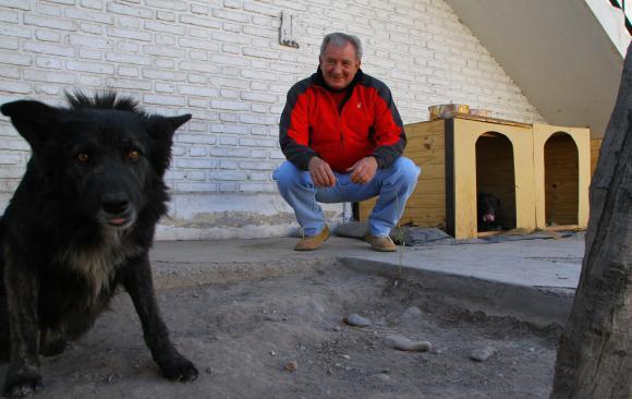 University Gets New Mascots, Three Stray Dogs