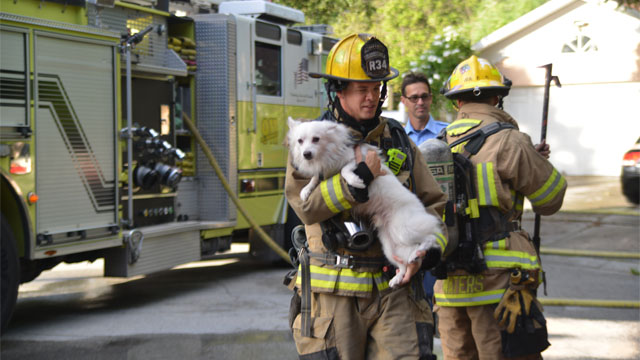 Casper the Dog Saved from House Fire