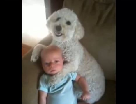 Dogs Love Babies Compilation