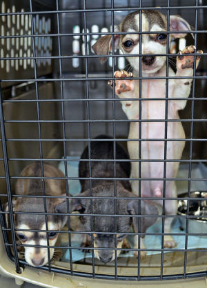 7.10.14 - Dogs Liberated from Virginia Puppy Mill Receiving Free Care1