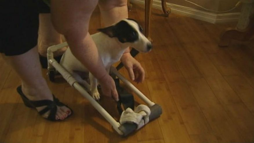Home Depot Employees Pay for & Build Disabled Dog's Wheelchair
