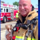 Firefighter Revives Chihuahua After 30 Minutes of CPR