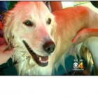 Dog Wash Event Held in Colorado to Raise Money for Prescription Pet Program