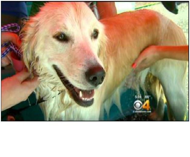 Dog Wash Event Held in Colorado to Raise Money for Prescription Pet Program