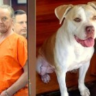 Man Gets 10 Years for Dragging Dog