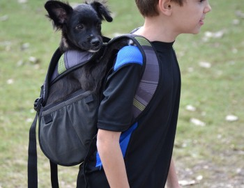 Newly Designed Dog Carrier Allows