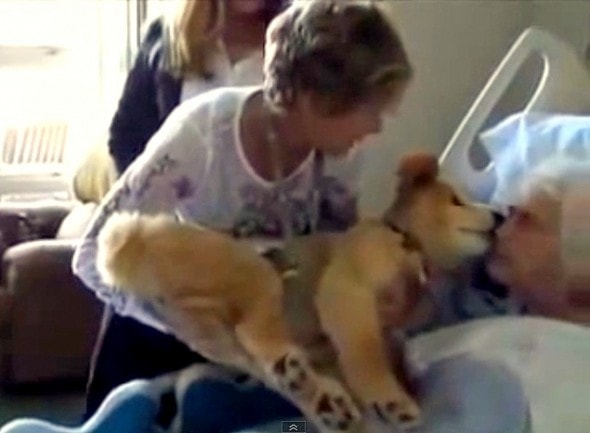 7.18.14 - 19-Year-Old Therapy Dog Gives Meaning to Dying Woman