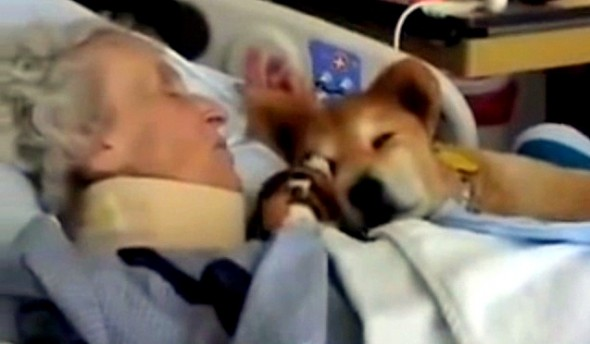 7.18.14 - 19-Year-Old Therapy Dog Gives Meaning to Terminal Patients2