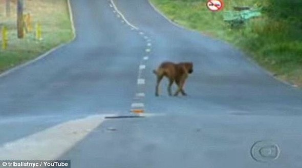 7.18.14 - Dog Travels Eight Miles Each Night to Feed Her Friends2