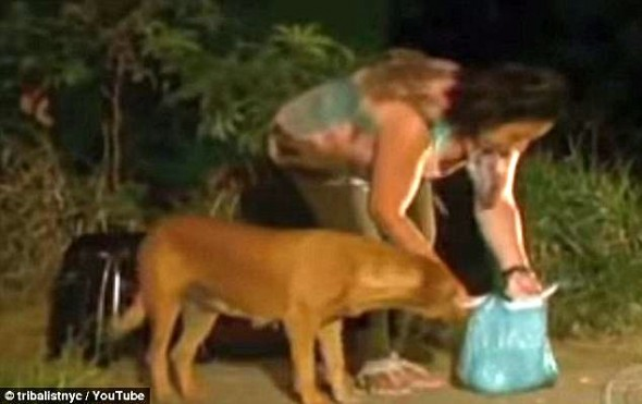 7.18.14 - Dog Travels Eight Miles Each Night to Feed Her Friends3