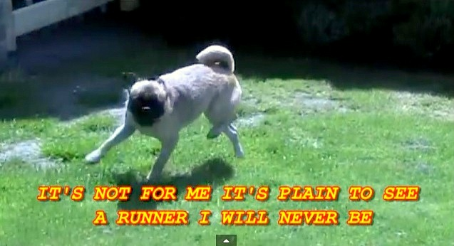 Loca – The Pug Who Can't Run