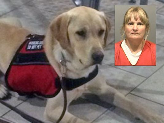 Trainer Arrested and Facing Charges over $20,000 Service Dog