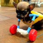 Clinic Staffers Make Disabled Puppy Cart from Old Toys
