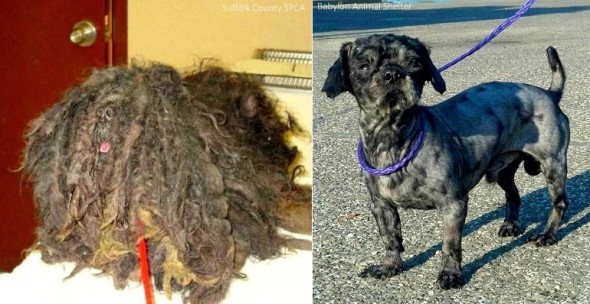 7.24.14 - Before and After - Four Pounds of Fur3
