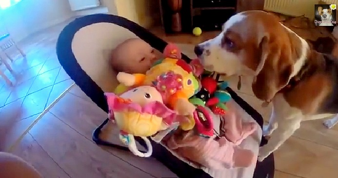 Dog Apologizes to Baby in a Big Way