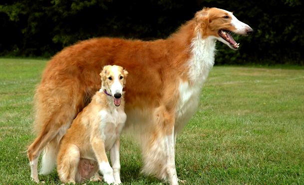 Big Rare Dog Breeds