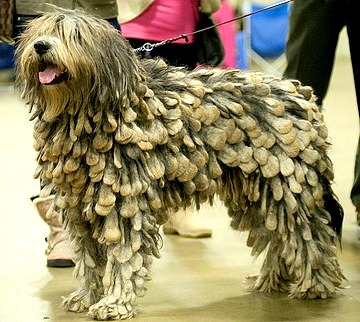 7.26.14 - Most Interesting Looking Dogs12