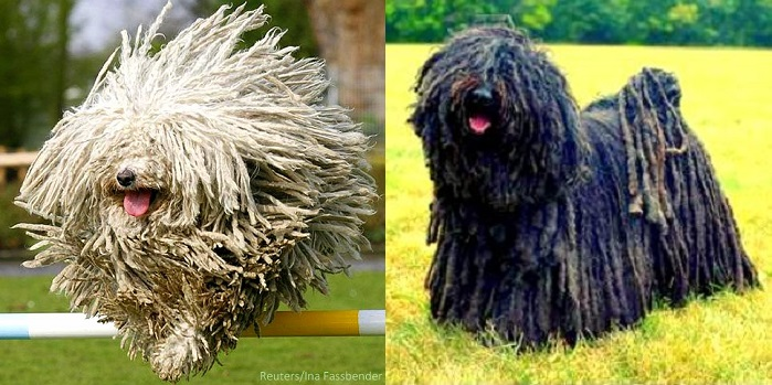 26.14 - Most Interesting Looking Dogs6 Unique Looking Dog Breeds
