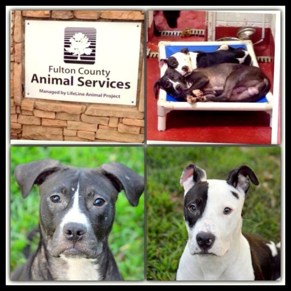 7.27.14 - Dogs Who Found Love at Shelter Get Adopted Together4