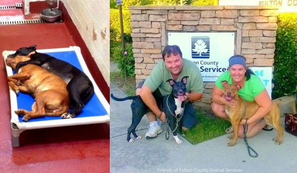 7.27.14 - Dogs Who Found Love at Shelter Get Adopted Together6