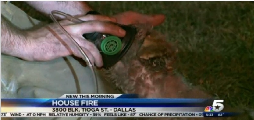 Firefighters in Texas Rescue Dog from Blaze