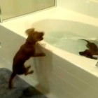 These Dogs Absolutely LOVE Bathtime