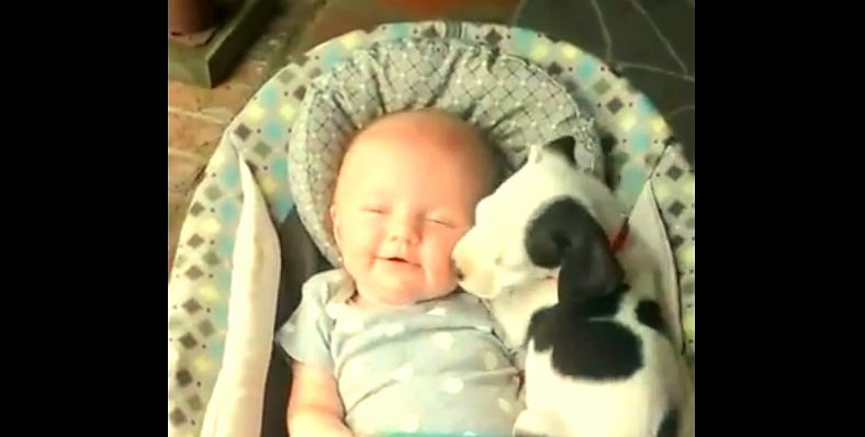 Baby and Pit Bull Puppy Are Best Friends