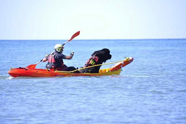 Beach in Spain Employs dog as a Lifeguard at Beach