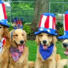 7.3.14 - 4th of July Tips1