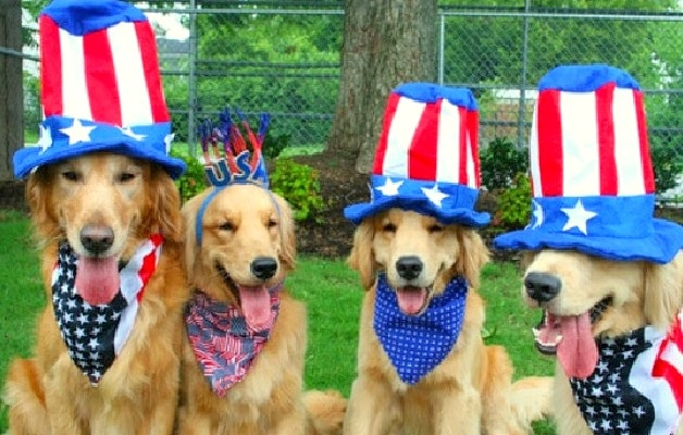 Tips to Keep Your Dogs & Cats Safe and Stress-Free This 4th of July