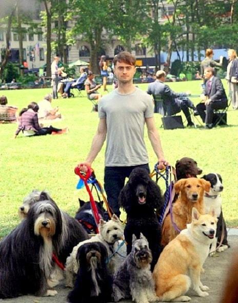 7.3.14 - Daniel Radcliffe - Dog Walker1
