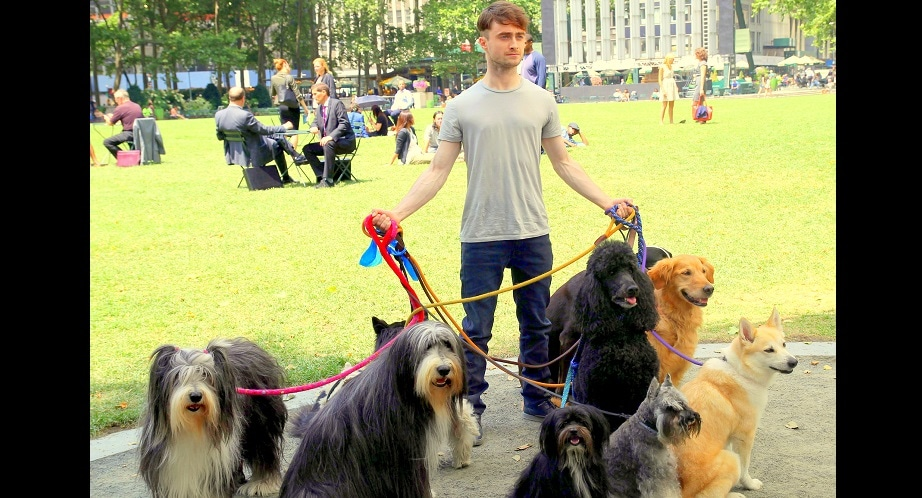 Daniel Radcliffe:  Dog Walker?